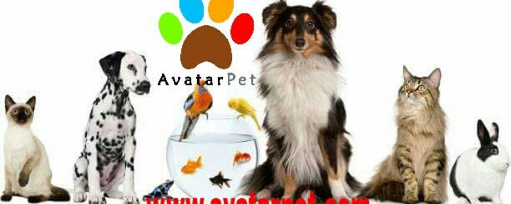 AvatarPet Cover Image