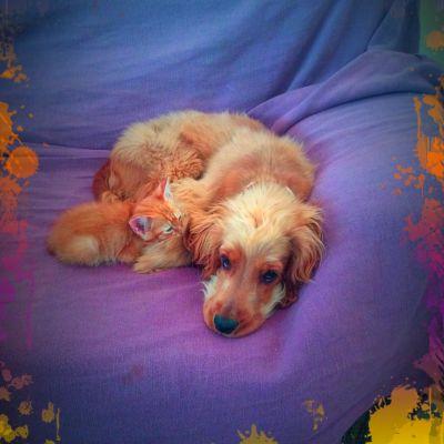 Sofi Profile Picture